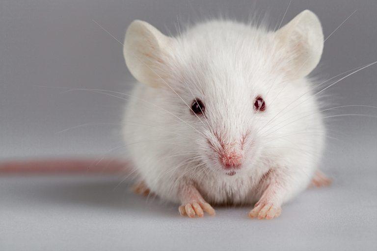 NKT Photonics 前臨床試験、小動物イメージング